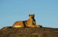 Migration Safari to Ndutu