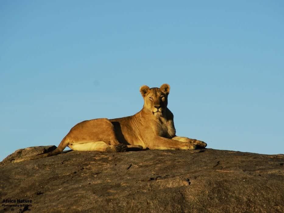 Adventure Family Safari Africa Nature Photography And Safaris Gallery3