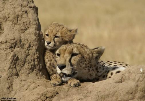 Adventure Family Safari Africa Nature Photography And Safaris Gallery7