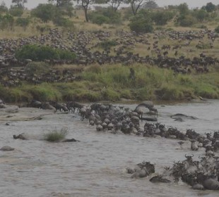 Photographic River Crossing Safari