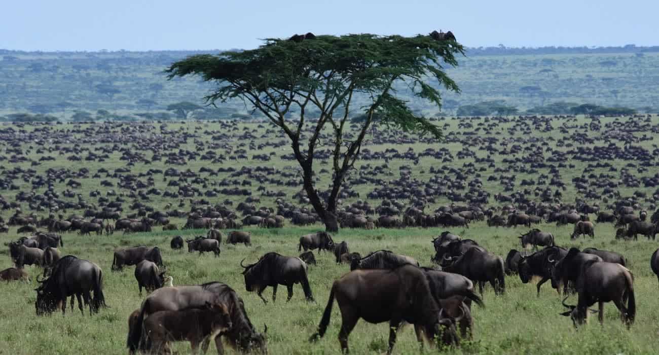 Africa Nature Photography And Safaris Migration Safari