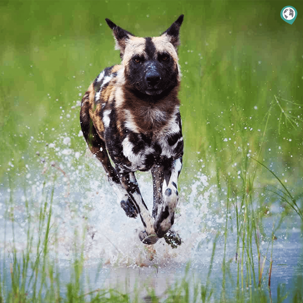 Lesser-Known Wildlife Animals in Kenya