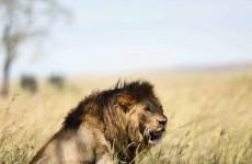 4-Day Tanzania Comfort Safari