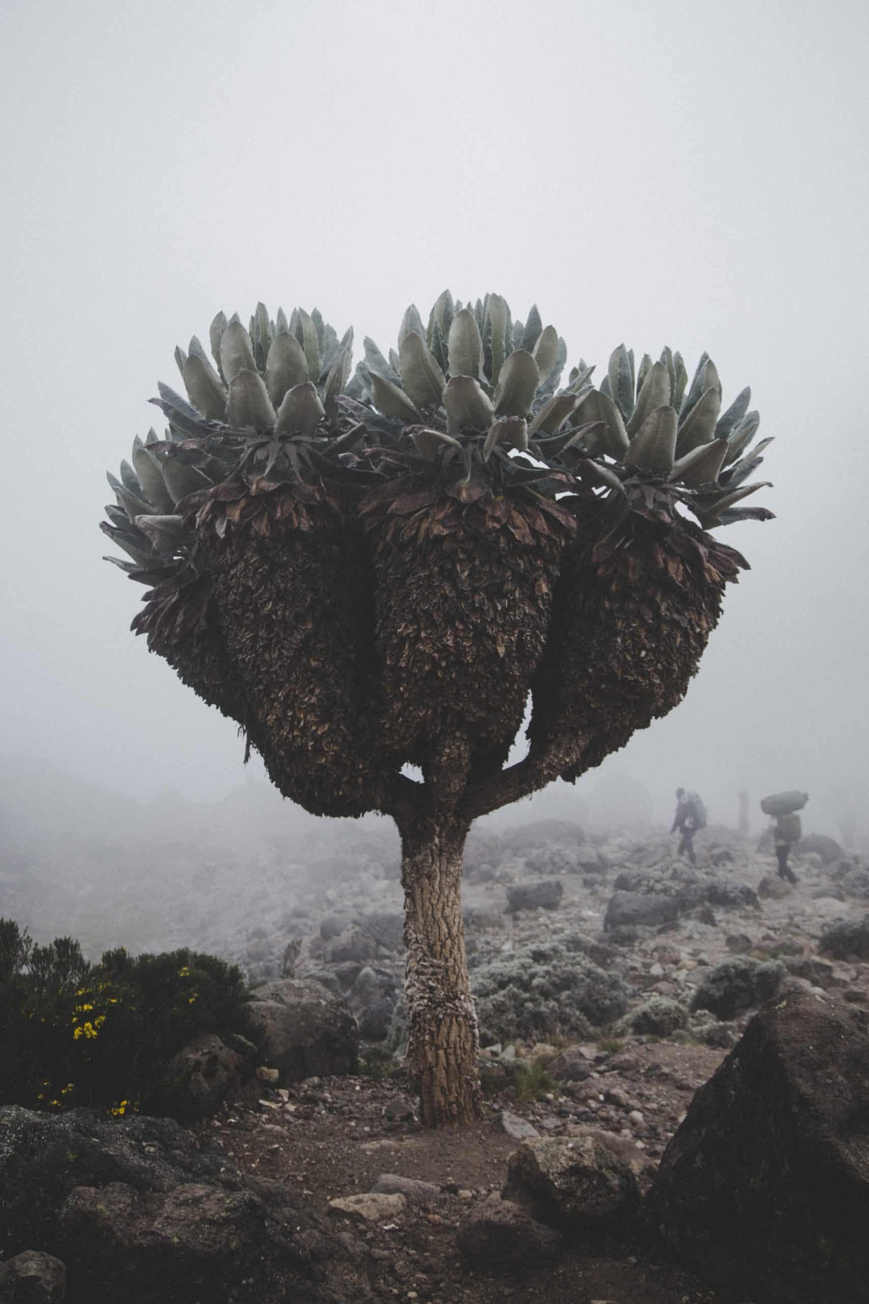 Kiliserengoro Tours And Safaris, Serengeti National Park, Ngorongoro, Tarangire National Park, Mikumi National Park (6)