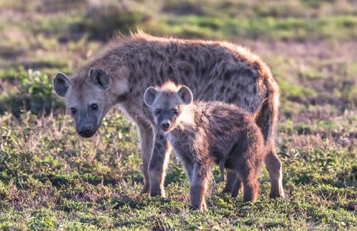 5 Amazing African Safari Destinations That Your Kids Will Love