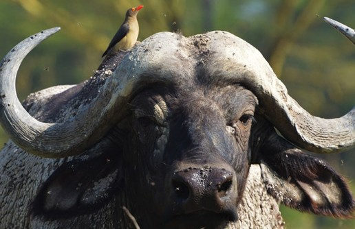 First-Timer's Guide to Seeing Africa's Big 5 Animals on Safari