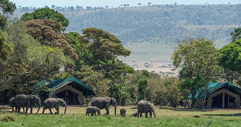 5 Tips For Choosing The Best Luxury Safari Camp in Africa