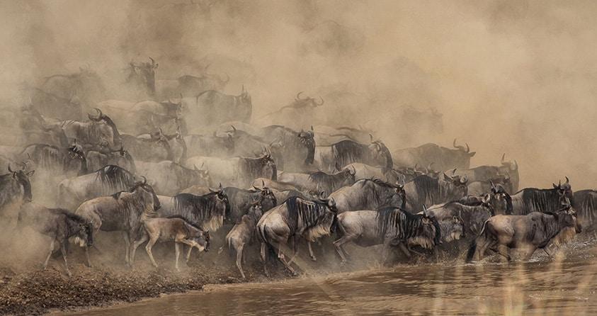 Safari Deal Top African Parks 02