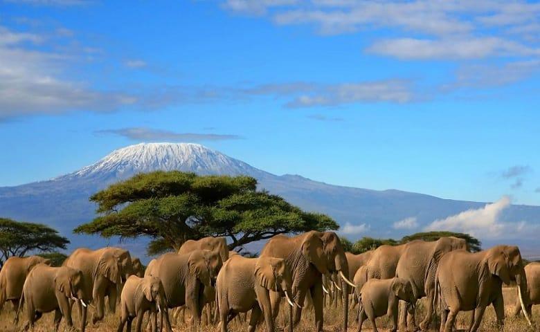 0 Amboseli Elephants 990x490