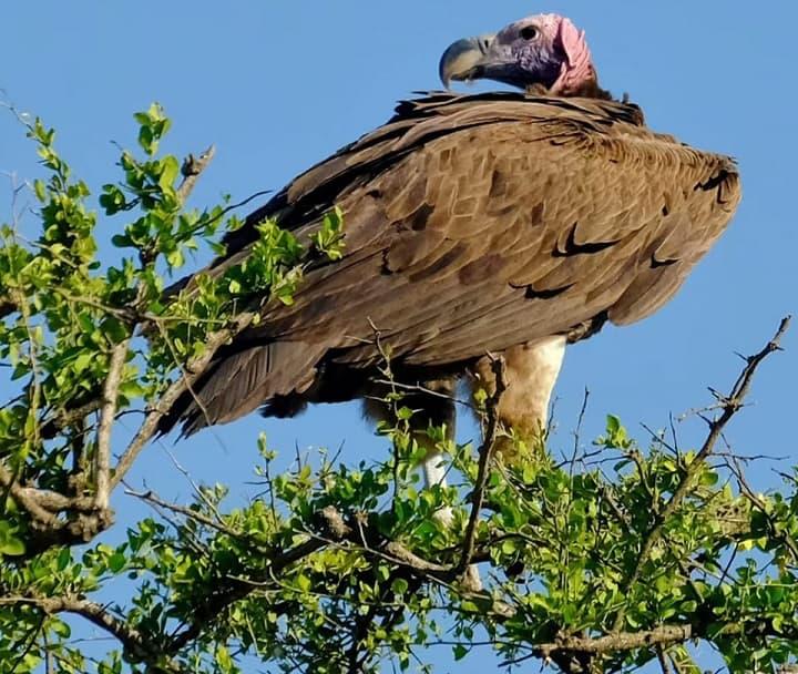 0 Banner Birdwatching 3