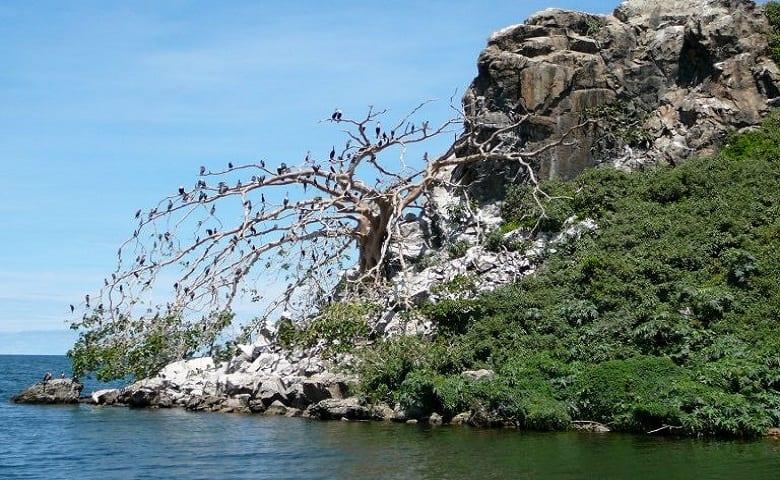 1 Bird Island 768x519