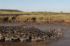6-Day Serengeti Migration Safari