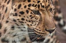 4-Day Northern Tanzania Luxury Safari