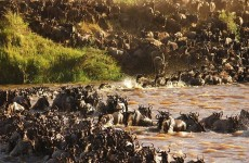 Spectacular Serengeti Migration Safari