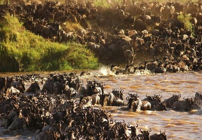 Spectacular Serengeti Migration Safari