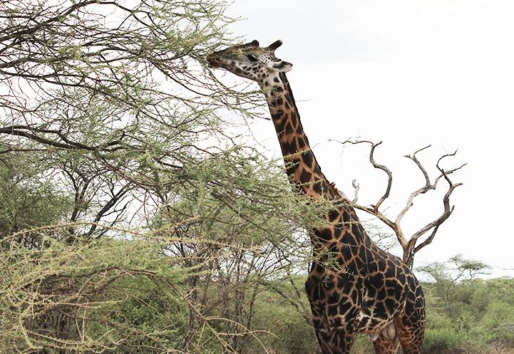 3 Day Taste Of Tanzania Safari