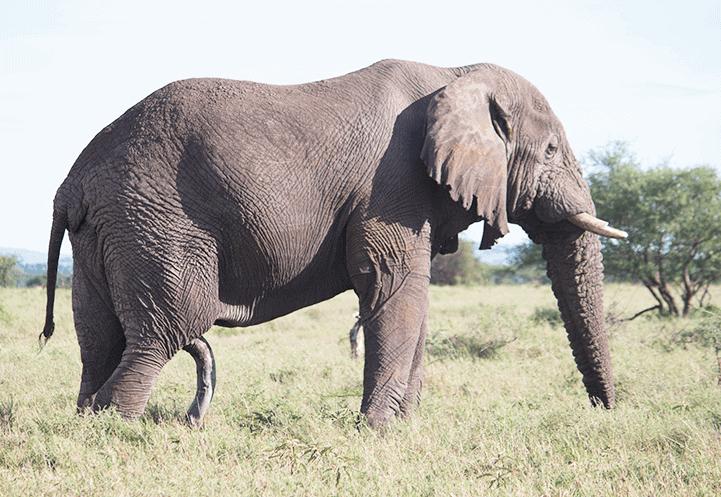4 Day Wilderness Tanzania Safari