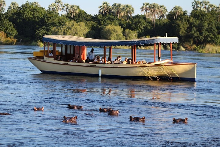 735 A Boat Loaded With Tourists Views A Herd Of Hippos