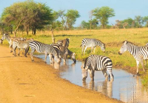 9 Days Tanzania Safari