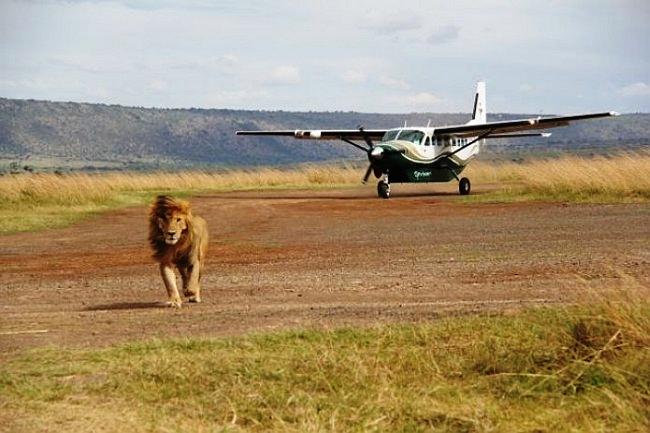 Airkenya Maasai Mara