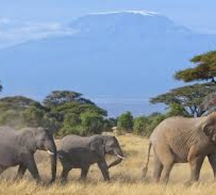 3-Day Amboseli National Park Camping Safari