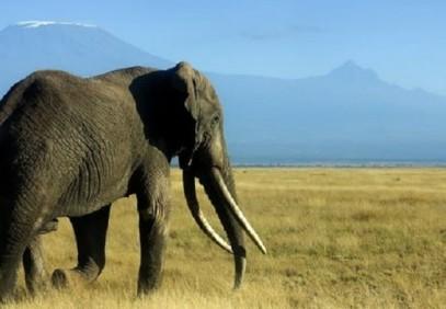 6-Day Kenyan Camping Safari