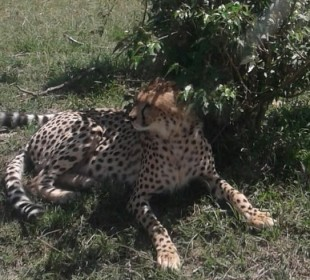 5-Day Masai Mara & Kenya Lakes