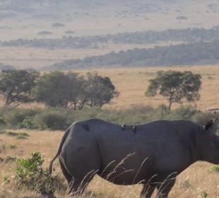 12-Day Classic Kenya Safari