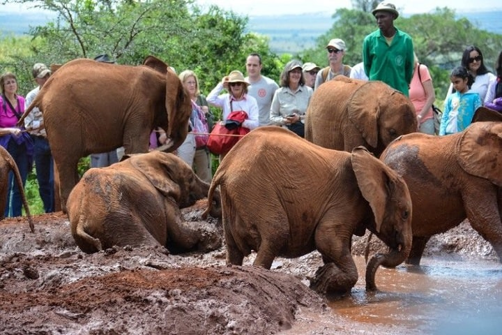 David Sheldrick Elephant Orphanage 820x500