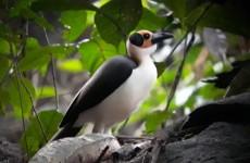 Ghana Birding & Forest Safari