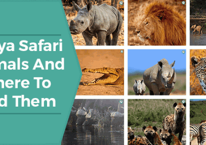 Kenya Safari Animals And Where To Find Them