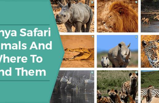 Kenya Safari Animals And Where To Find Them