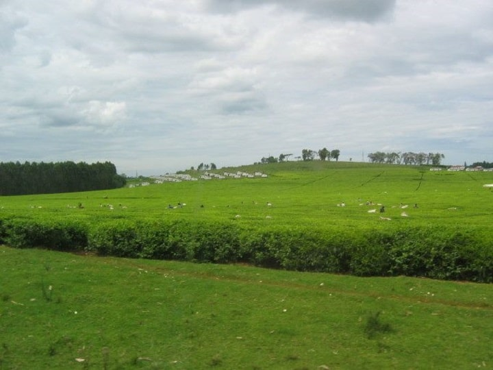 Kericho Tea County