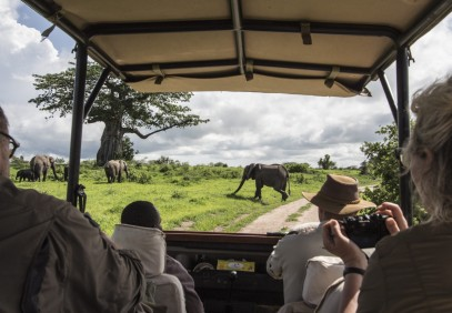Best of Tanzania Safari