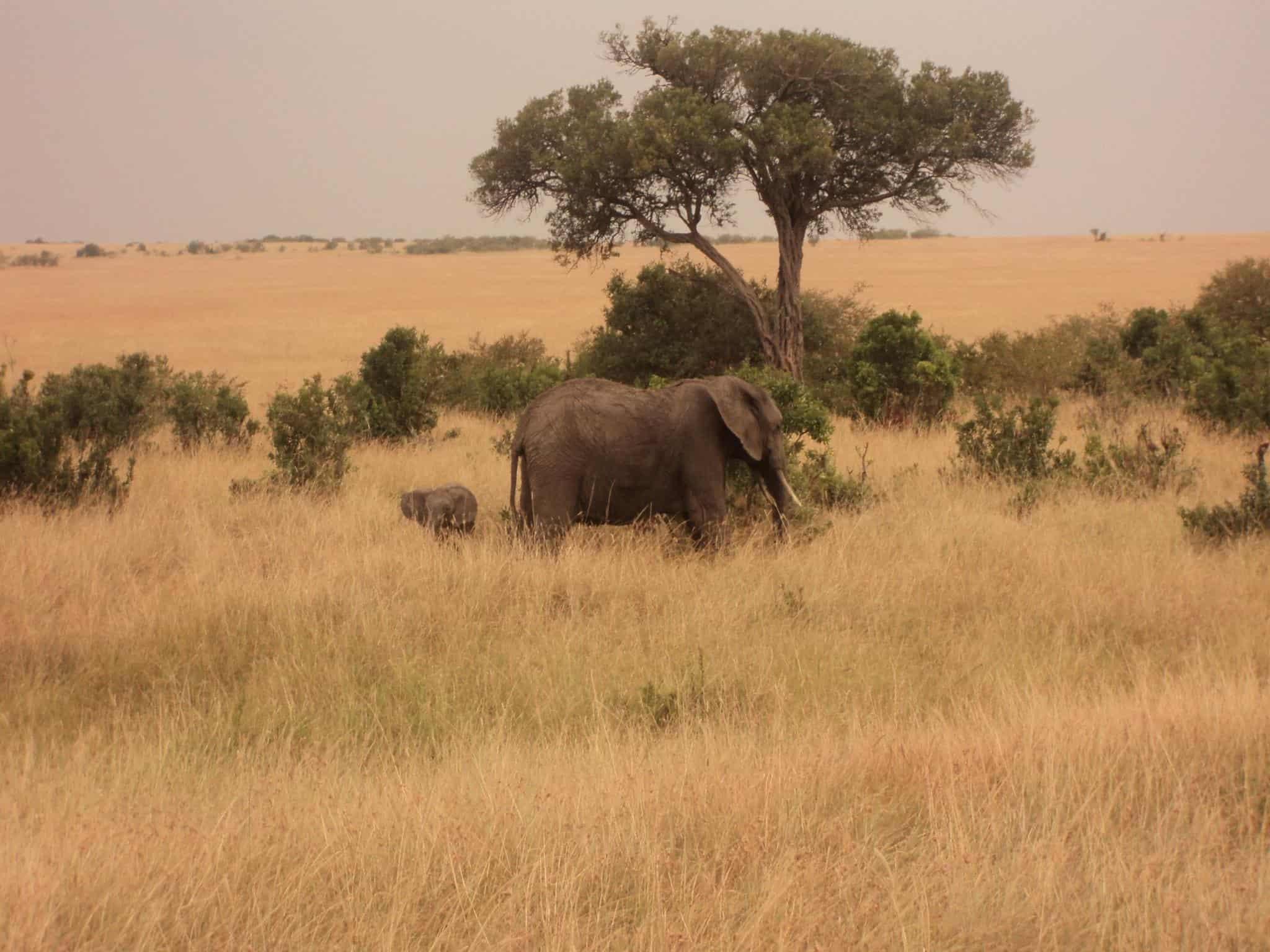 Maasai Mara Jumbo