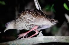 20-Day Birding & Cultural Tour