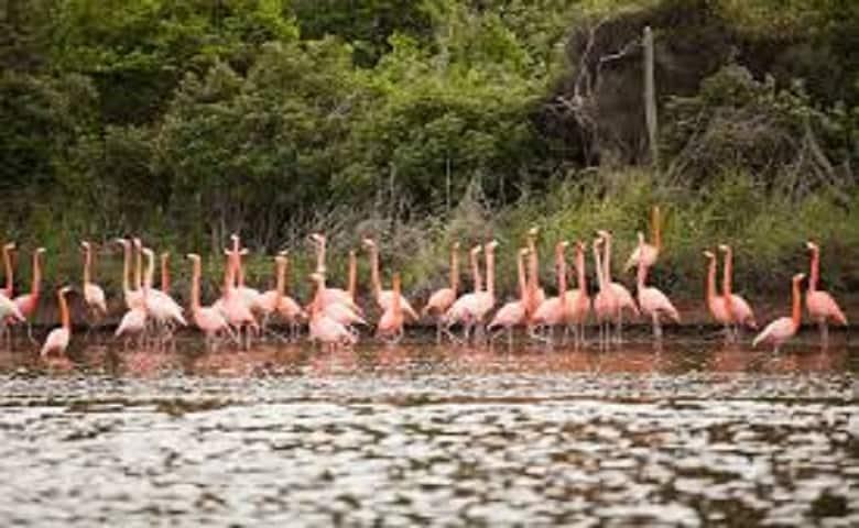 Otok Swamp