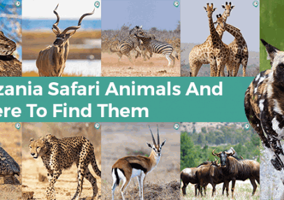 Tanzania Safari Animals and Where to Find Them