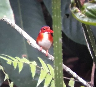 21-Day Birding & Nature Tour