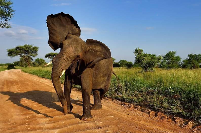 Angryelephant
