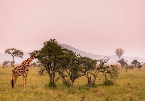 Balloon Safari Serengeti Giraffe
