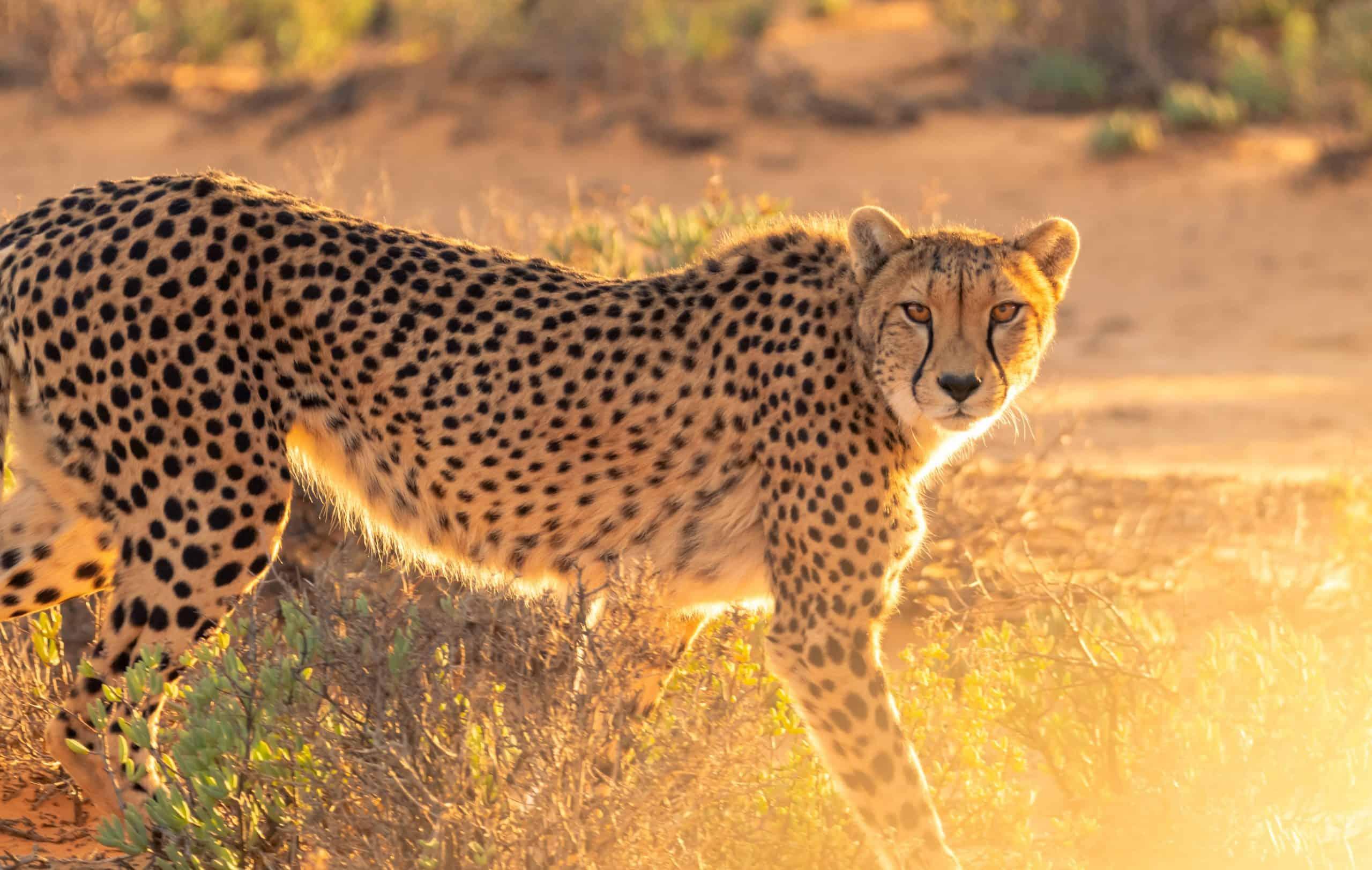 Burigi Chato Safari Tanzania Safari Pictures Serengeti Ngorongoro Lake Manyara Tarangire Arusha National Park (260) Copy