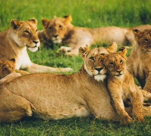 3-Day Tanzania Wildlife Experience