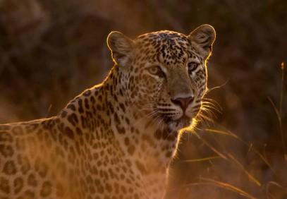 5-Day Serengeti Migration Safari