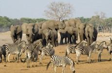 13-Day Best of Zimbabwe Safari