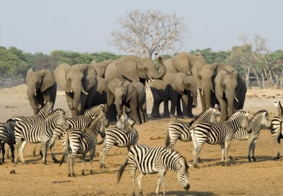 13-Day Best of Zimbabwe Safari