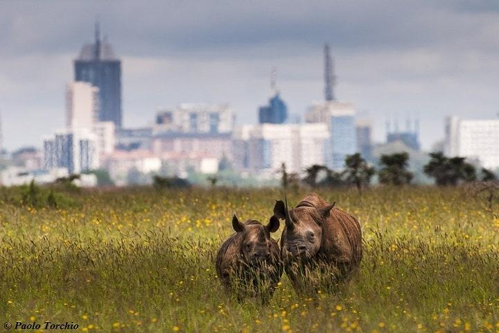Nairobi Park
