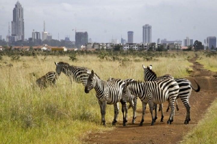 Nairobi Park1