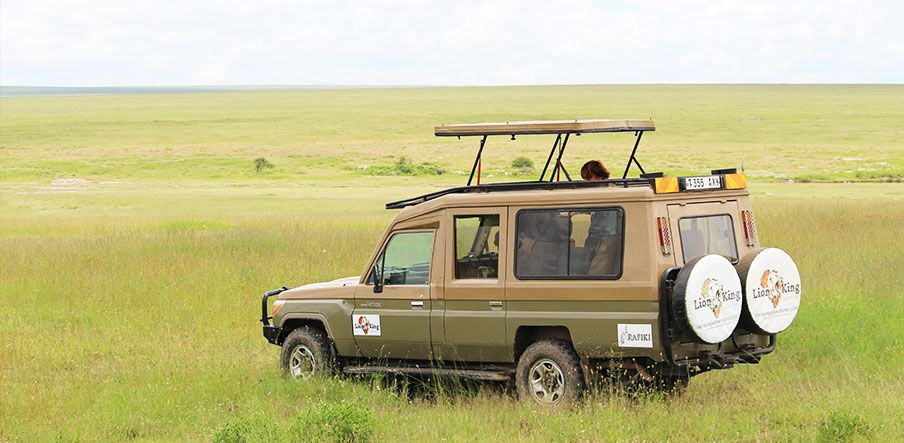 Reasons To Go On Safari In Tanzania