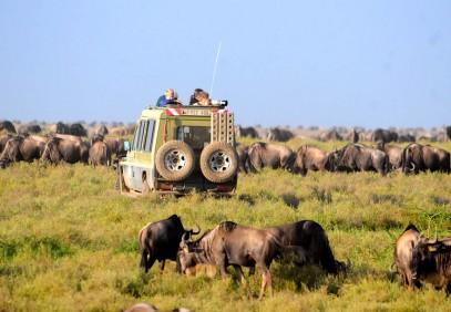 5-Day Tanzania Safari Experience